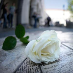 Eine weiße Rose auf den steinernen Flugblättern vor dem LMU Hauptgebäude