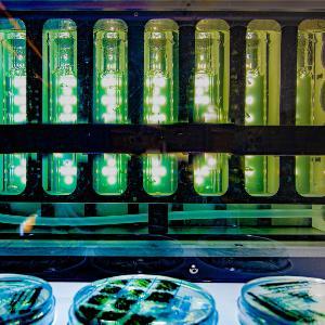 Aufnahme vom Inneren des Labors von Prof. Dr. Dario Leister