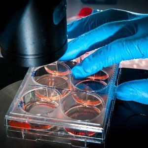 Ein Behälter mit roten Proben wird mit einem Mikroskop untersucht