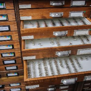 Ein Archiv von Insekten.
