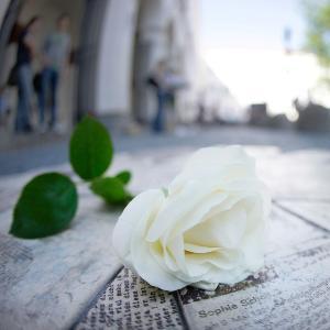 Eine weiße Rose liegt auf den Gedenktafeln der Flugblätter vor dem LMU Hauptgebäude.