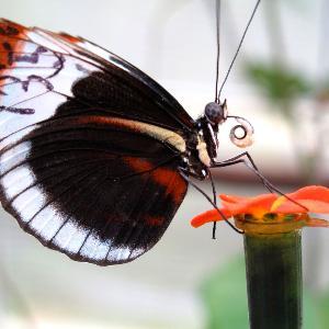 Aufnahme eines Schmetterlings