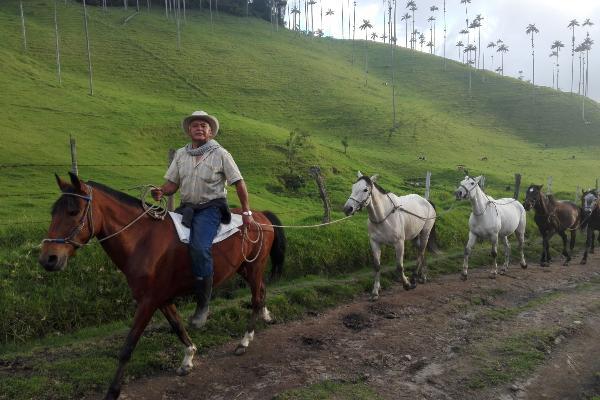 Ein Mann sitzt auf einem Pferd und zieht weitere Pferde hinter sich her.