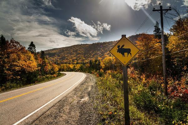 """Blick auf eine kurvige Straße in Kanada mit einem """"Vorsicht, Elche""""-Schild"""