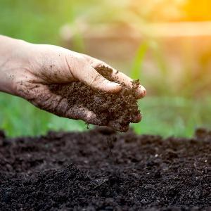 Bild eines Arms. Die Hand lässt frische Erde auf den Erdboden rieseln.