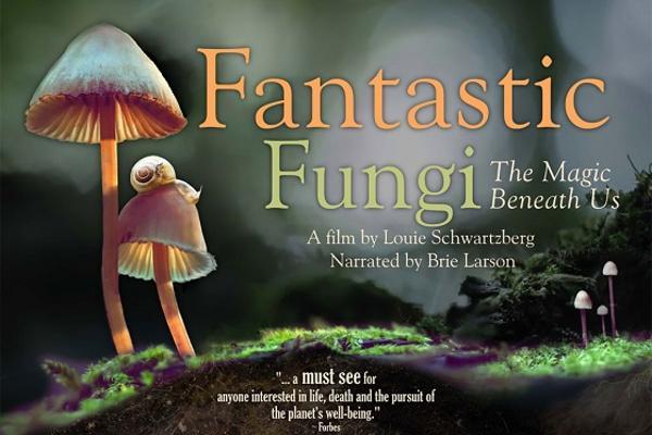 Poster Fantastic Fungi