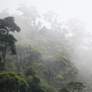 Feuchtigkeit steigt zwischen den Bäumen im Amazonas-Regenwald auf.